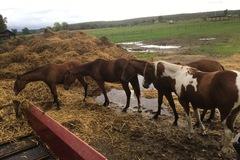 Echange: Échange fumier de cheval contre paille