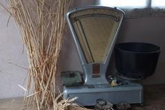 Vente : bouquets de blé dans le 91