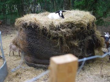 Demande: Foin/Paille dégrader, pourri, non utilisable pour l'élevage