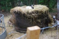 Requesting: Foin/Paille dégrader, pourri, non utilisable pour l'élevage