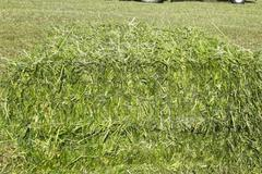 Vente : Récolte 4-7 Mai 2020 enrubanné Bio Luzerne-Seigle-trèfle