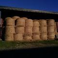 Vente : Foin de prairie naturelle