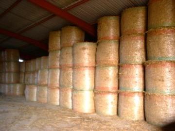 Selling: ballot de Paille de blé en balles rondes